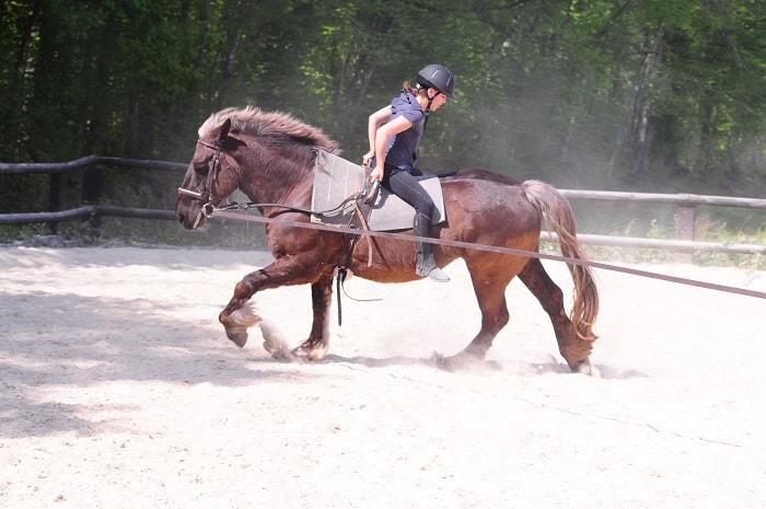 Domane Equestre de Chevillon - Yonne-Bourgogne-Franche-Comte (7)