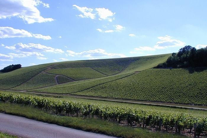 Vignes du Domaine Hamelin, Bourgogne Franche-Comté, Lignorelles, Yonne