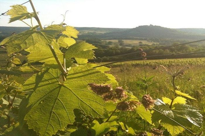 Domaine Maria Cuny, Bourgogne Franche-Comté, Vezelay, Yonne