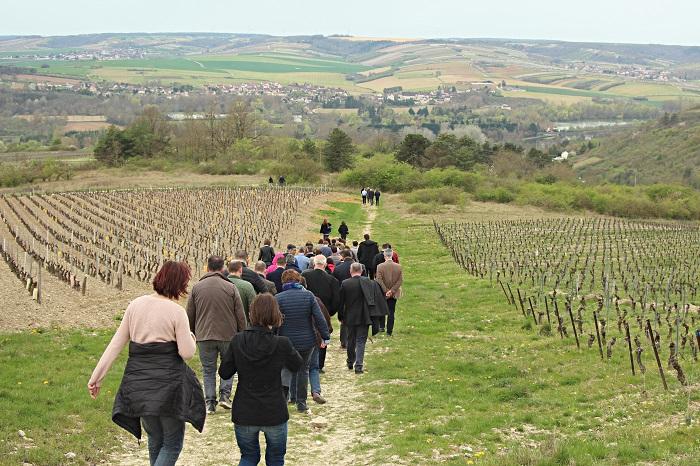 Bailly visites des vignobles