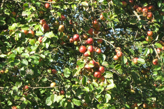 ferme_des_petites_vallees_cider_apple_juice_local_product_burgundy_family